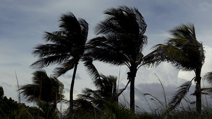 Windy weather palm trees