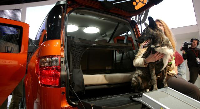 041309 Honda dog P1