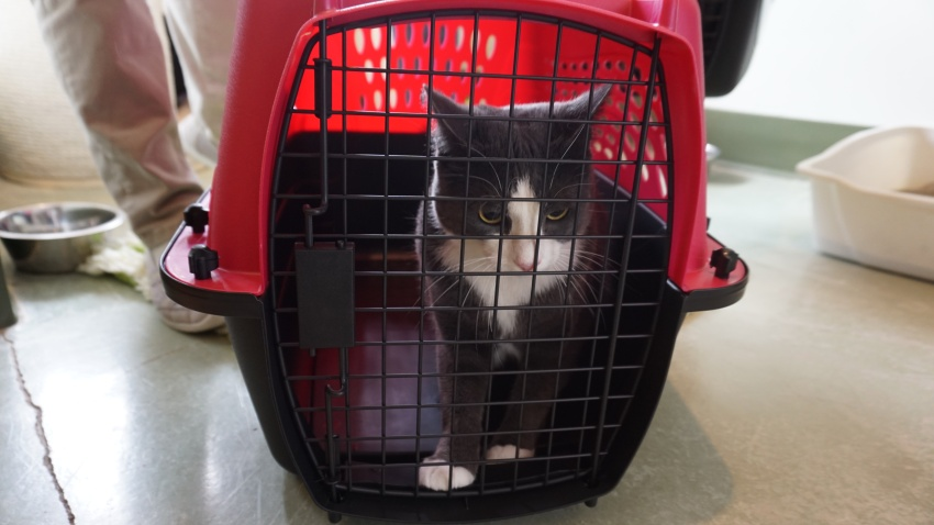 [UGCCHI-CJ-pets]Photos of Adopting Family - Clear the Shelters - PAWS Chicago