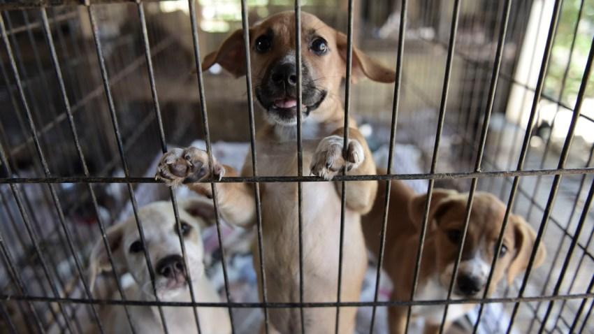 APTOPIX Puerto Rico Hurricane Abandoned Animals