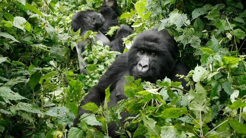 Congo Virunga Park