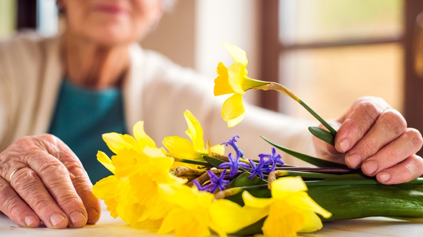 Senior woman by the window holding bouquet of daffodils