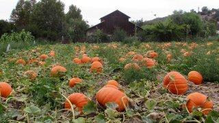 Bates-Nut-Farm-Pumpkin-Patch-Facebook