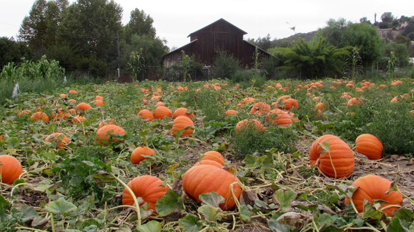 Bates-Nut-Farm-Pumpkin-Patch-Facebook