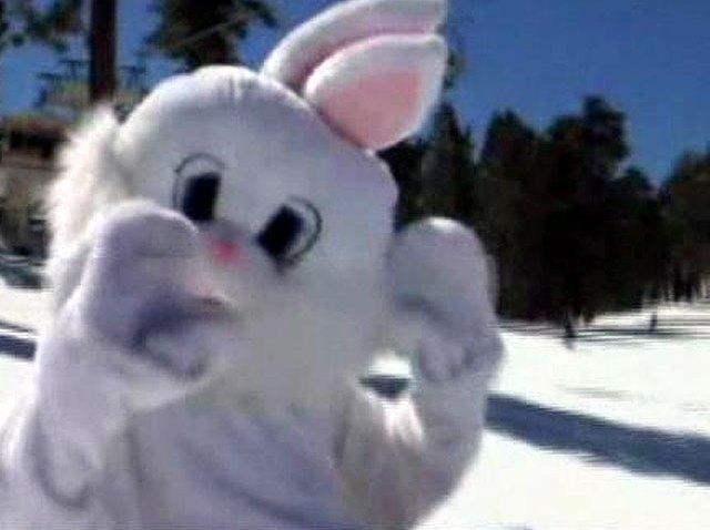 Big-Bear-Bunny