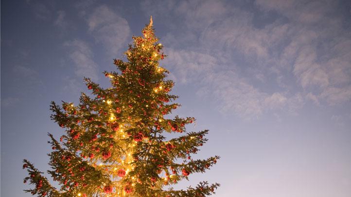 Christmas-Tree-Lighting-Res