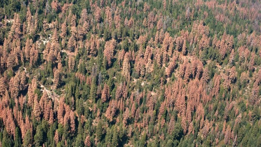 Millions of Dead Trees Across California