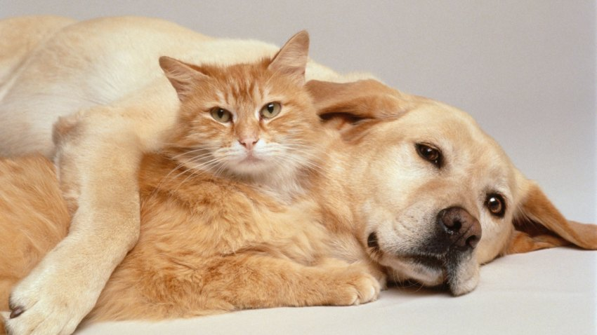 Dog and Cat Stock Generic File Photo