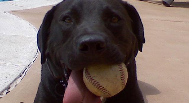 Dog-JM-having-a-ball-DTown-