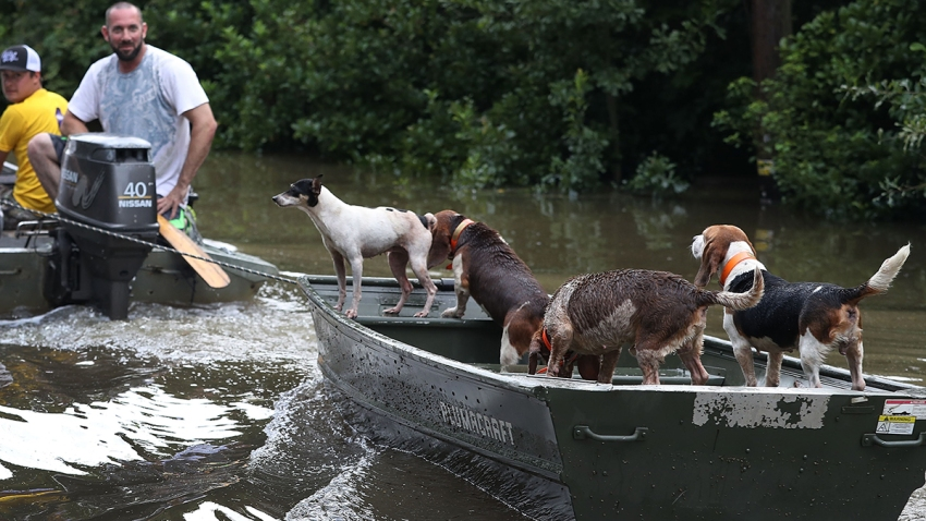 Dogs-Flood-GettyImages-590466872