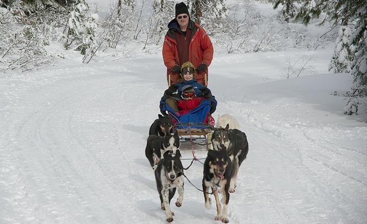 DogsleddingShasta
