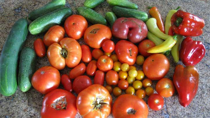 Garden-Vegetables-Tomatoes