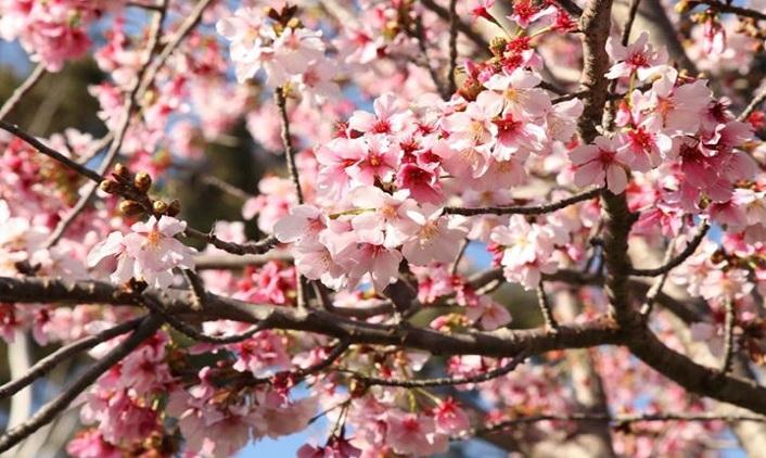 GardenBlossoms