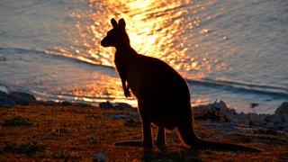 Kangaroo Island Australia fires