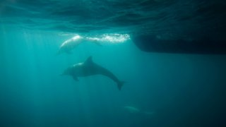 GettyImages-137990062_Dolphin.jpg