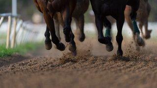 File image of horses racing