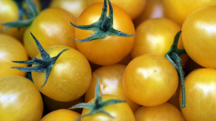 73298325DS003_tomatoes