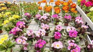 Plants at a nursery garden center