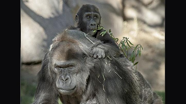 GorillaVila55thwithMonroe_web