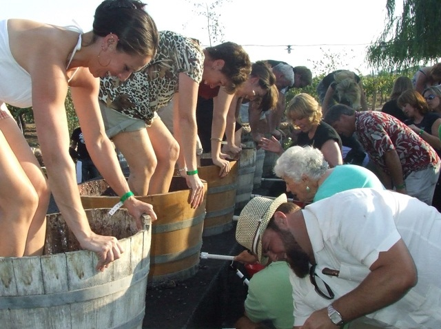 Grape Stomp 2009