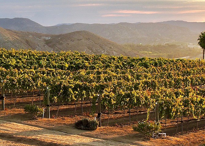 In Changing Times, Wineries Resolve to Adapt