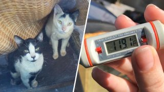 Twenty-four cats rescued from a car reaching 118 degrees are on the mend, according to the Inland Valley Humane Society.