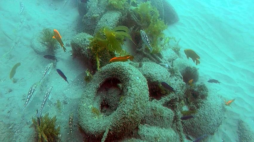 Junk Reef