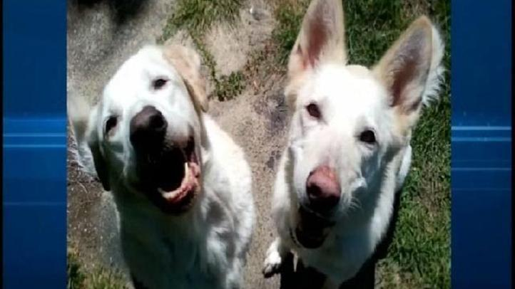 KNSD_DA_Man_Beat_These_Dogs_to_Death_050911_39_mezzn_722x406_1916749645.jpg