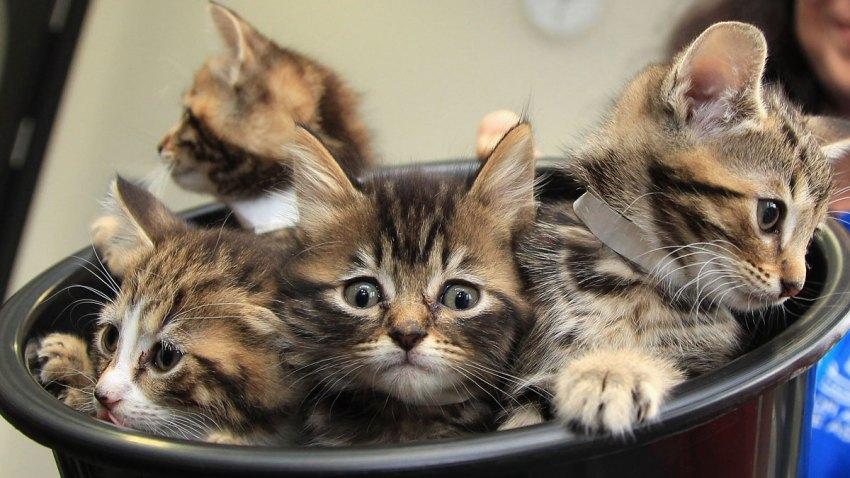 Kittens-in-a-bucket