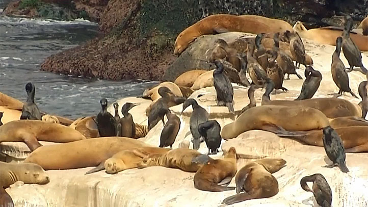 Pupping Season Underway in La Jolla