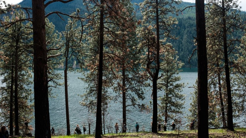 In this May 18, 2017, file photo, students from Lake City High School visit Farragut State Park in Idaho to learn about the effects that trees have on the environment just north of Coeur d'Alene, Idaho.