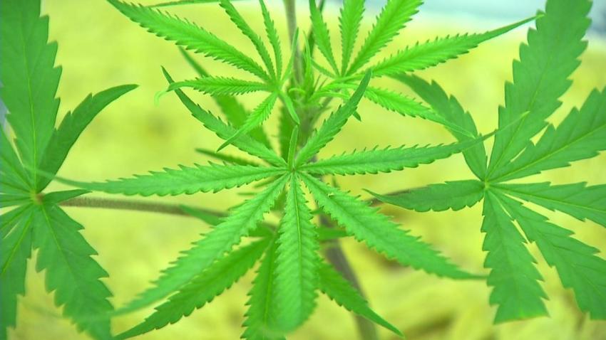 Marijuana B-roll