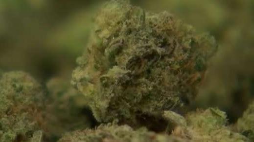Marijuana_Industry_Update