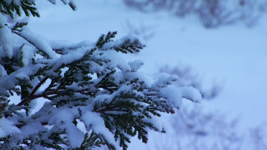 Mount-Laguna-Snow-Shane-122915_3