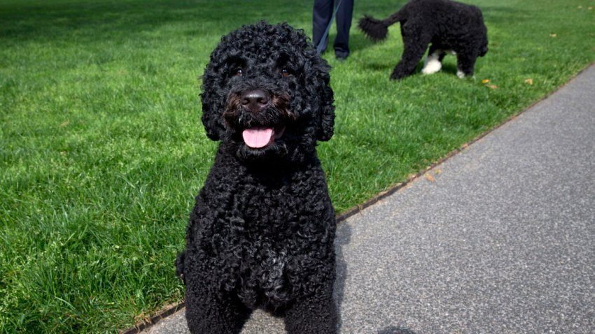Presidential Dogs Obama