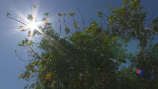 The sun shines behind the branches of a tree in a blue sky
