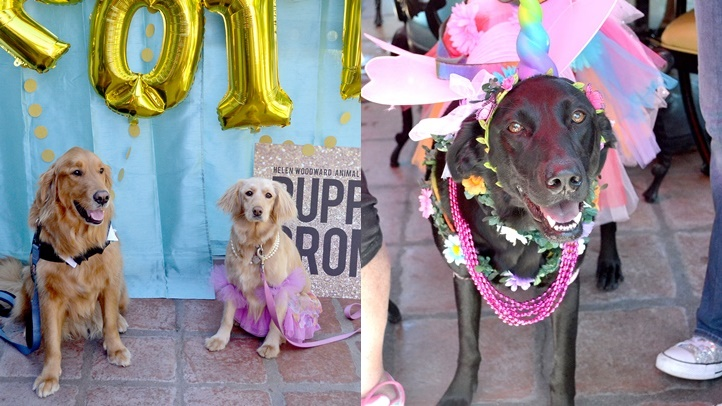 Puppy Prom (2) - Copy-horz