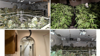 1,200 Pot Plants Found in Illegal Riverside County Grow House