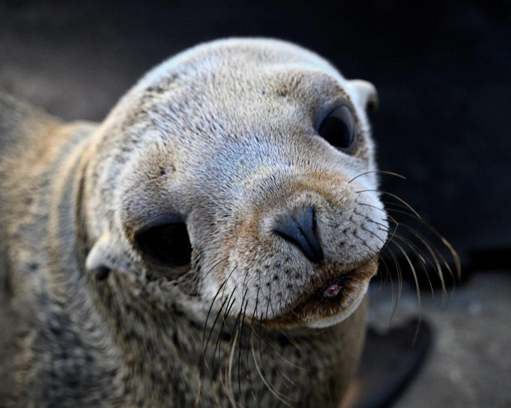 SeaWorld Rescued Sea Lions