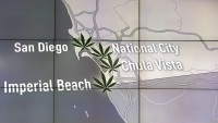 Legal Marijuana in San Diego Cities Explained