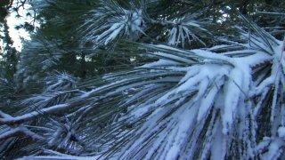 Snow-generic-pine-tree-San-Diego-2015