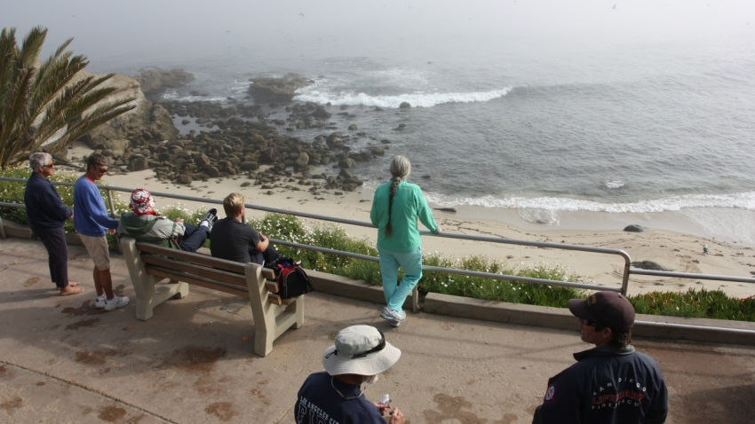 Feb 2011 Tsunami Advisory SD3