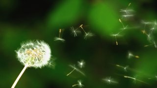 Allergy Season Generic OTSstock
