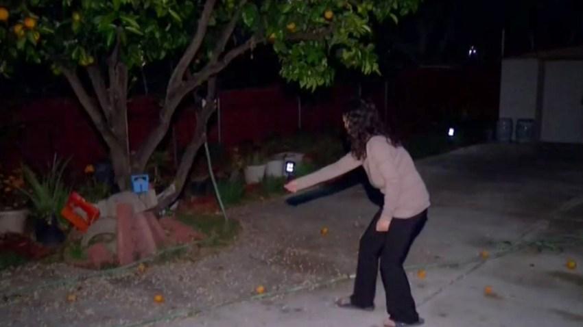 backyard pest control scam