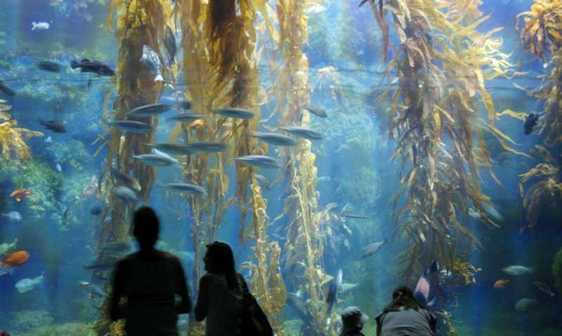 birch_aquarium
