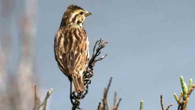 birds_released_wild2