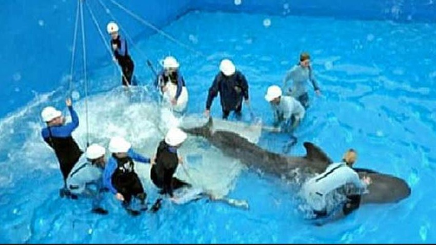 dolphin stadium