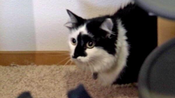 "[UGCPHI-CJ-pets]""@NBCPhiladelphia: Family claims 22-pound cat held them hostage: http://t.co/zWp5ivEfM3 http://t.co/"