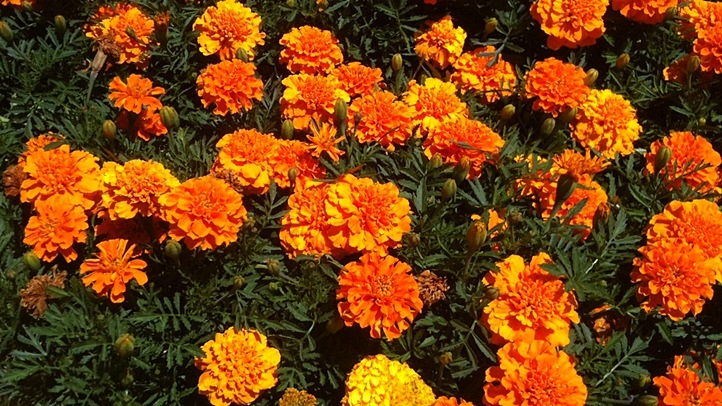 flowersbrightorange1