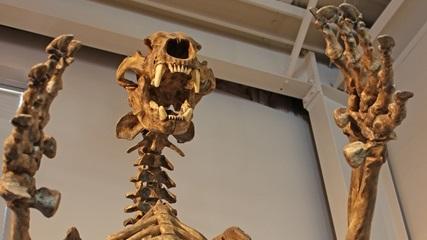 fossilstofalls
